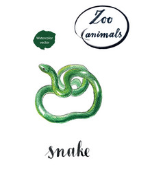 green coiled snake vector image vector image