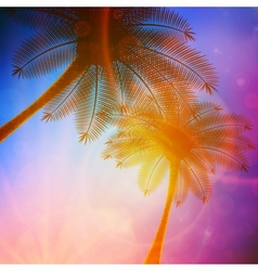 Palm trees with beautiful sunset vector image