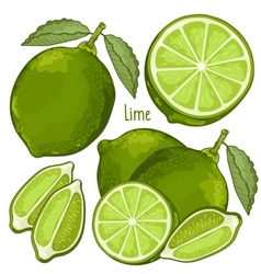 Lime isolated vector