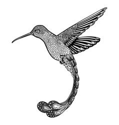 hummingbird zentangle style vector image