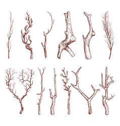 Sketch wood twigs broken tree branches set vector