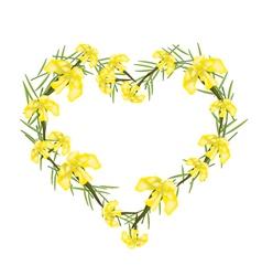 Yellow crape myrtle flowers in a heart shape vector