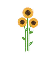 sunflowers spring natural icon vector image