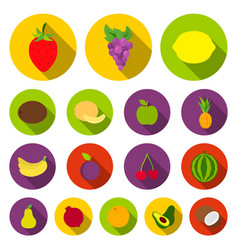 different fruits flat icons in set collection for vector image