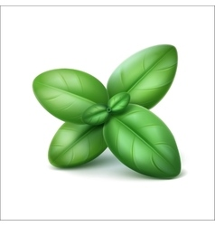 Green basil leaves close up isolated on background vector