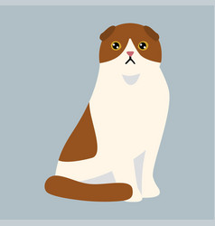 cat breed british shorthair cute pet white red vector image