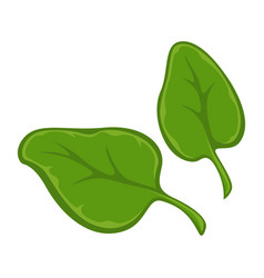 two small green leaves vector image
