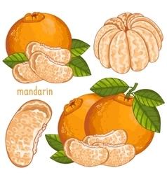 Mandarin isolated vector