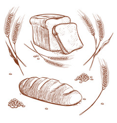 Bunch of wheat ears and bread hand drawn vector