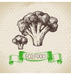 Hand drawn sketch broccoli vegetable eco food vector