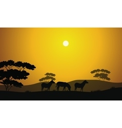 Beautiful zebra silhouette scenery vector