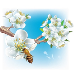 flowering branch and a bee vector image