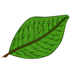 green leaf drawing by hand vector image vector image