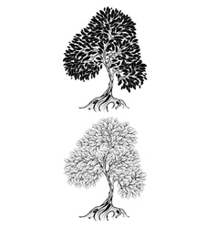 two contour tree vector image