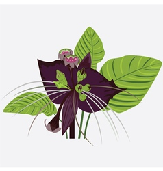 Black flower of devil with leaves vector