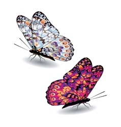 Two colorful butterflies vector