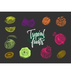 Colored Tropical Fruits Collection vector image vector image