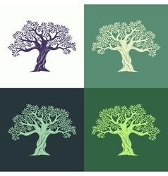 Hand drawn graphic olive trees set vector image