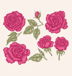 Pink rose flowers and leaves in vintage style vector