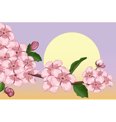 Apricot blossoming branch vector