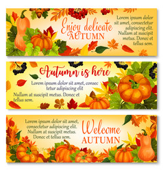 autumn banner with pumpkin fallen leaves berry vector image