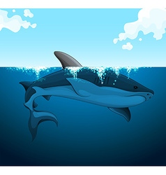 Big shark swimming under the water vector image