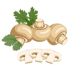 Mushrooms Healthy lifestile vector image vector image