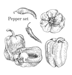 Peppers ink sketches set vector