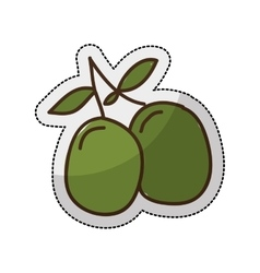 Olive plant isolated icon vector