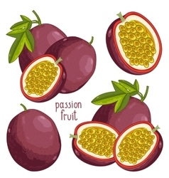 Passion fruit isolated vector