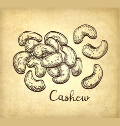 handful of cashews vector image vector image