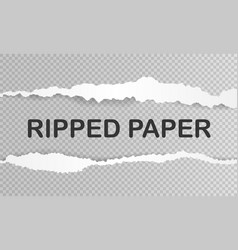 Realistic ripped paper vector
