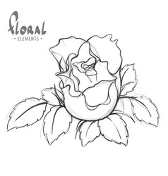 rose painted schematically vector image vector image