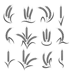 wheat or barley ears branch vector image