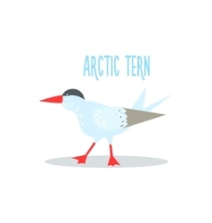 Arctic tern vector