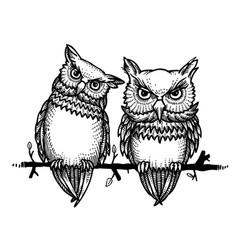 cartoon image of cute owls vector image vector image