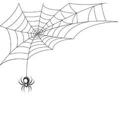 Spider web wallpaper vector