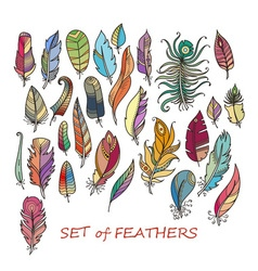 Ornate set of stylized and abstract feathers vector