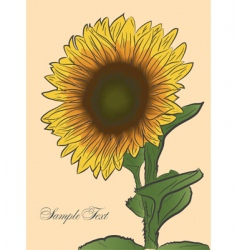 Sunflower vector