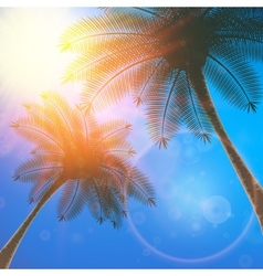 Palm trees and sun in sky vector