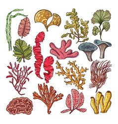 Seaweed and corals underwater natural plants vector