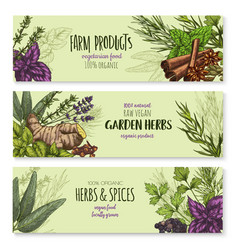 Banners set of natural spices and herbs vector