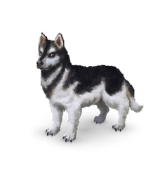 Photorealistic husky dog on white vector