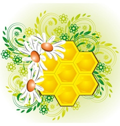 honeycombs in flowers vector image