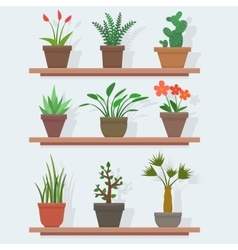 House plants and flowers in pots vector