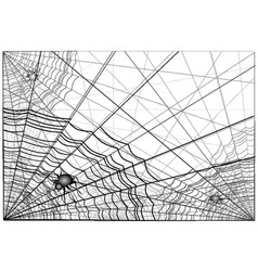 Web and spiders vector