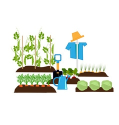 Vegetable beds vector