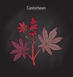 Castorbean or castor-oil-plant ricinus communis vector