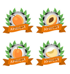 For ripe fruit yellow apricot vector