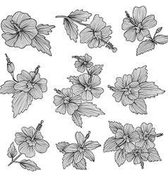 Hibiscus flowers set vector